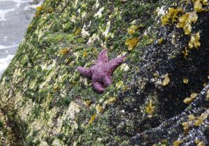 Interesting starfish