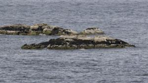 Believe it or not these are seals